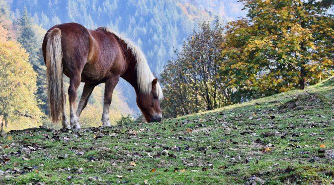 Wat kun je doen voor een goede weerstand van je paard?
